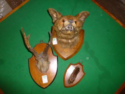 STUFFED FOXES HEAD & FOOT & ANTLERS